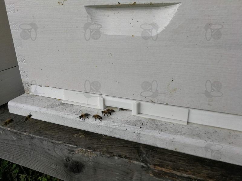 Méhek rablása